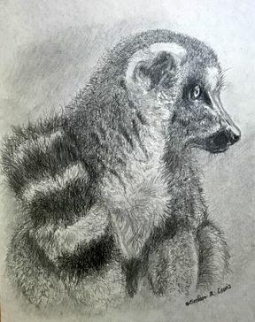 Lemur Study